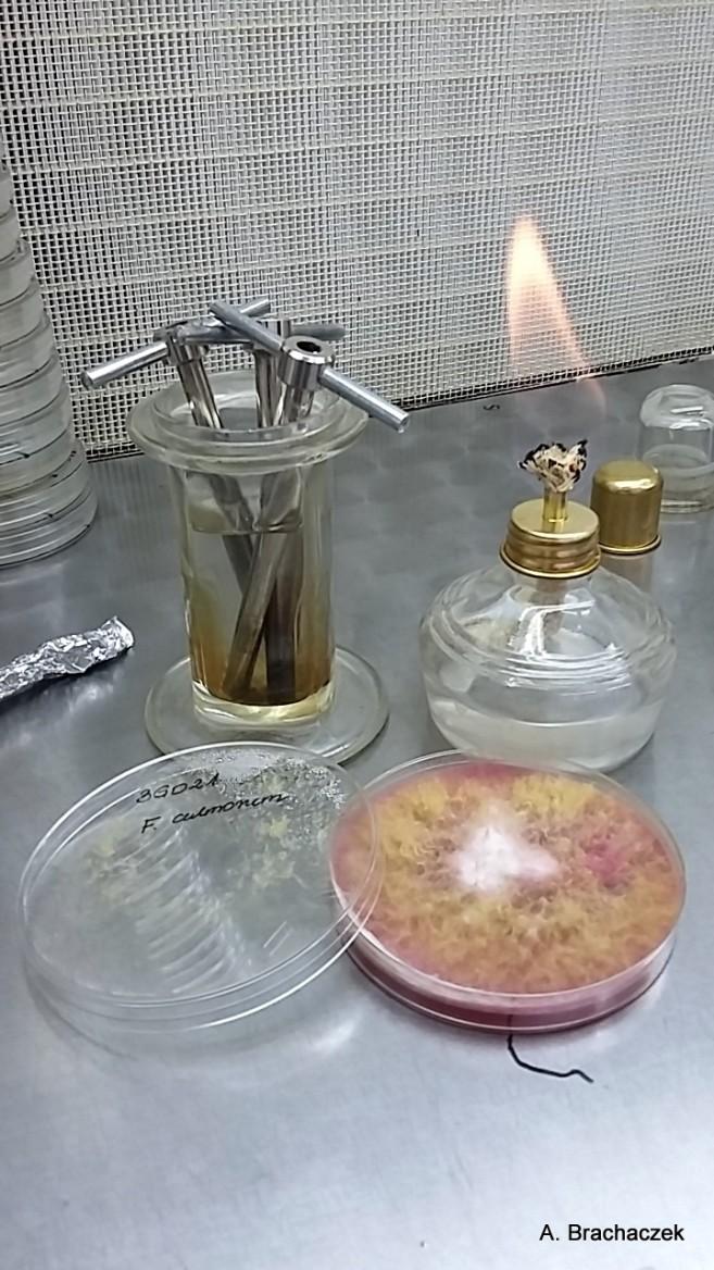 badania nad patogenami i herbicydami