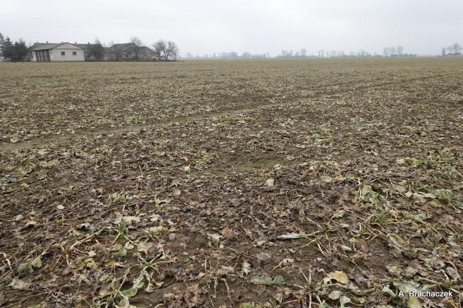 wygląd pola po zimie