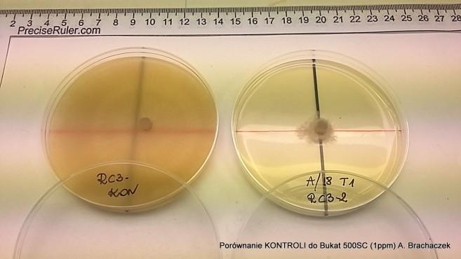 próbki podczas badań nad fungicydami