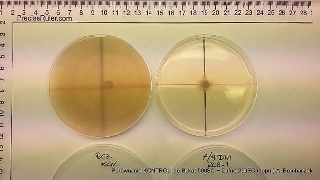 badania nad skutecznością fungicydów