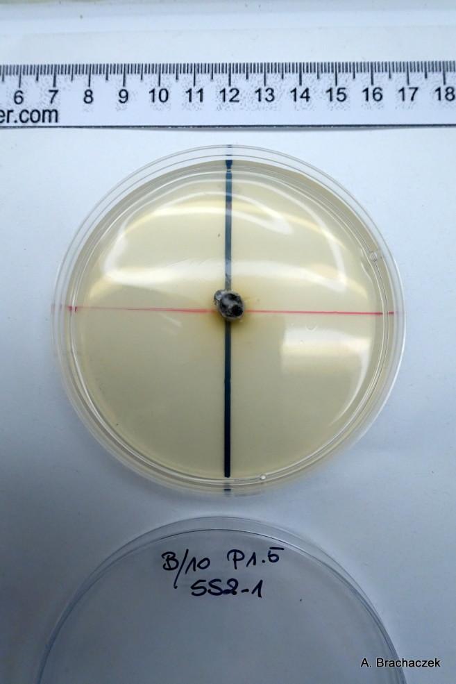 badania dotyczące skuteczności fungicydów