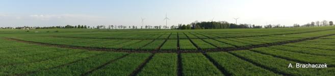zielone pole panorama