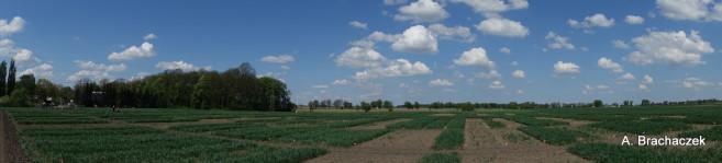panorama pola i niebieskiego nieba