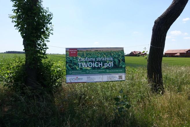 herbicydy do ochrony kukurydzy i rzepaku