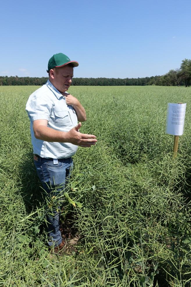 warsztat polowy o fungicydach i insektycydach do ochrony rzepaku i kukurydzy