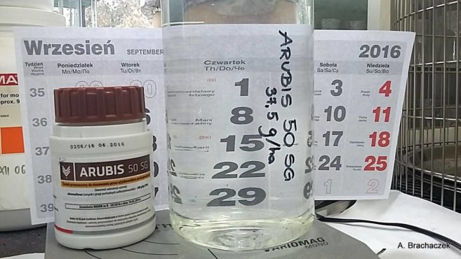 herbicydy arubis 50 sg