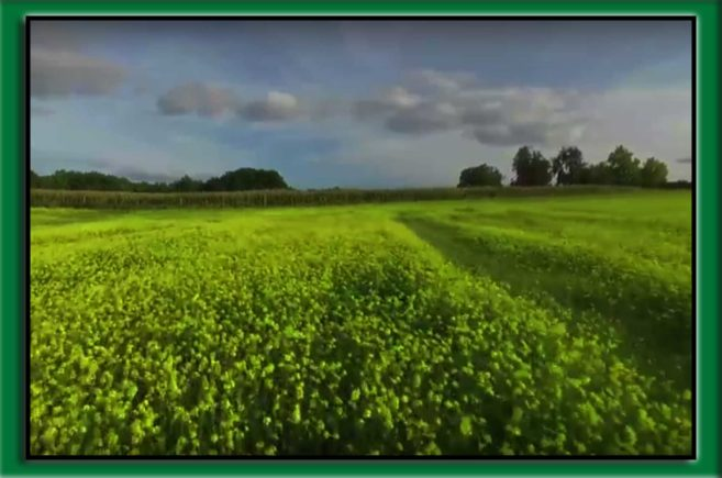 uprawy polne po zwalczeniu szkodników za pomocą insektycydów