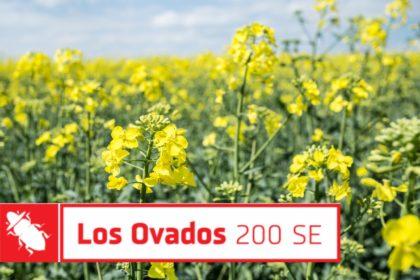 insektycyd Los Ovados Innvigo