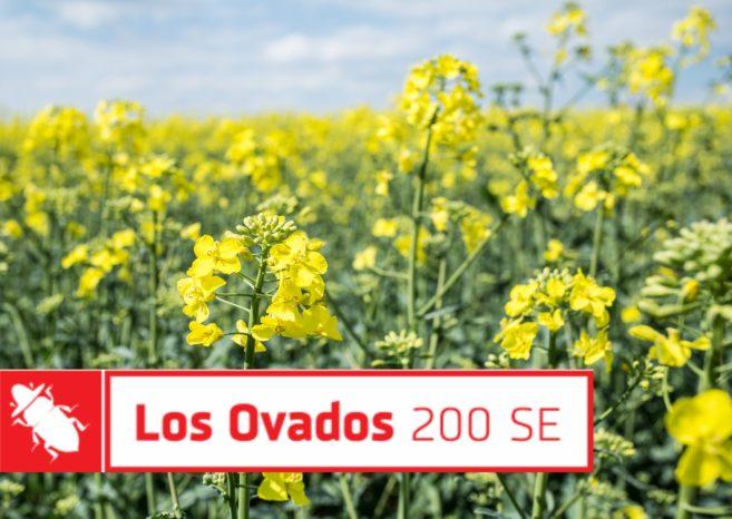 insektycydy Los Ovados Innvigo