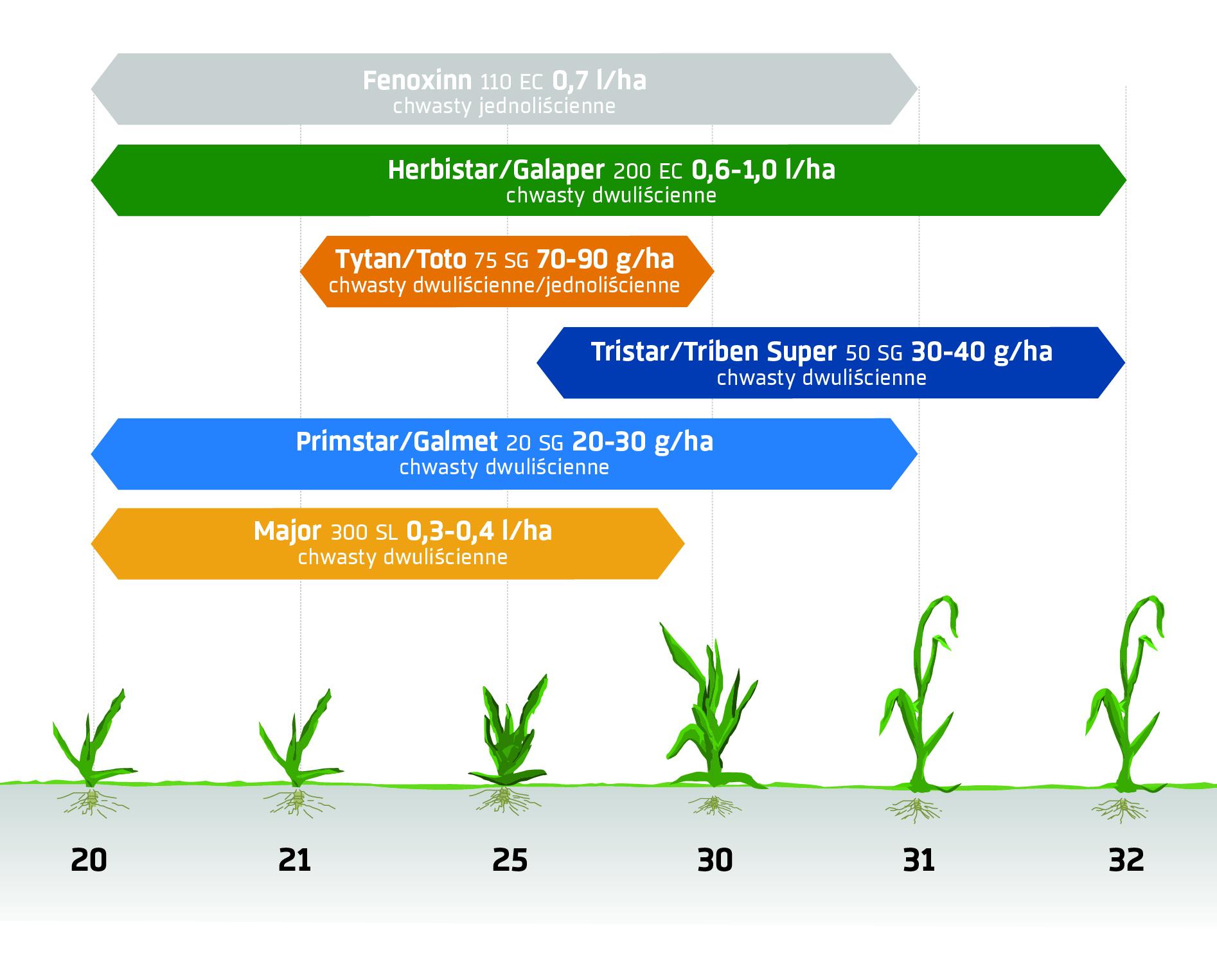 Wiosenne zabiegi herbicydowe - zboża ozime. Ochrona herbicydowa INNVIGO.