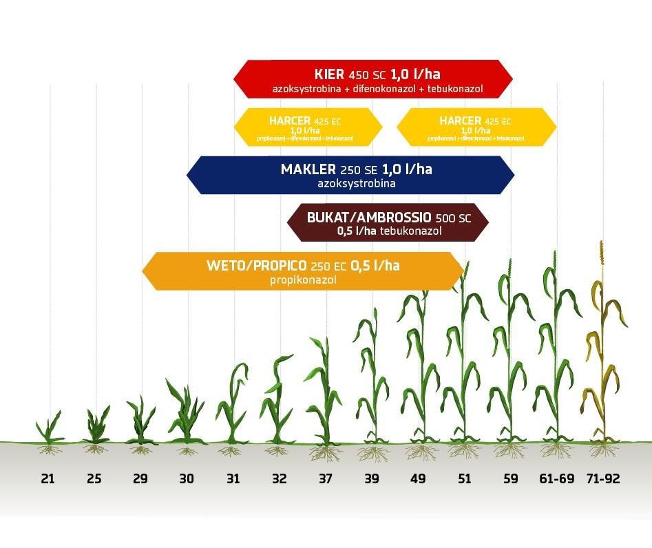 Zabiegi fungicydowe zboża jare Innvigo ochrona fungicydowa