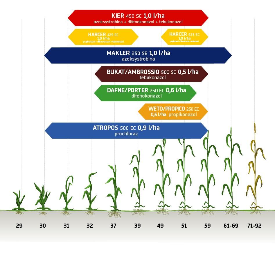 Zabiegi fungicydowe zboża ozime Innvigo ochrona fungicydowa