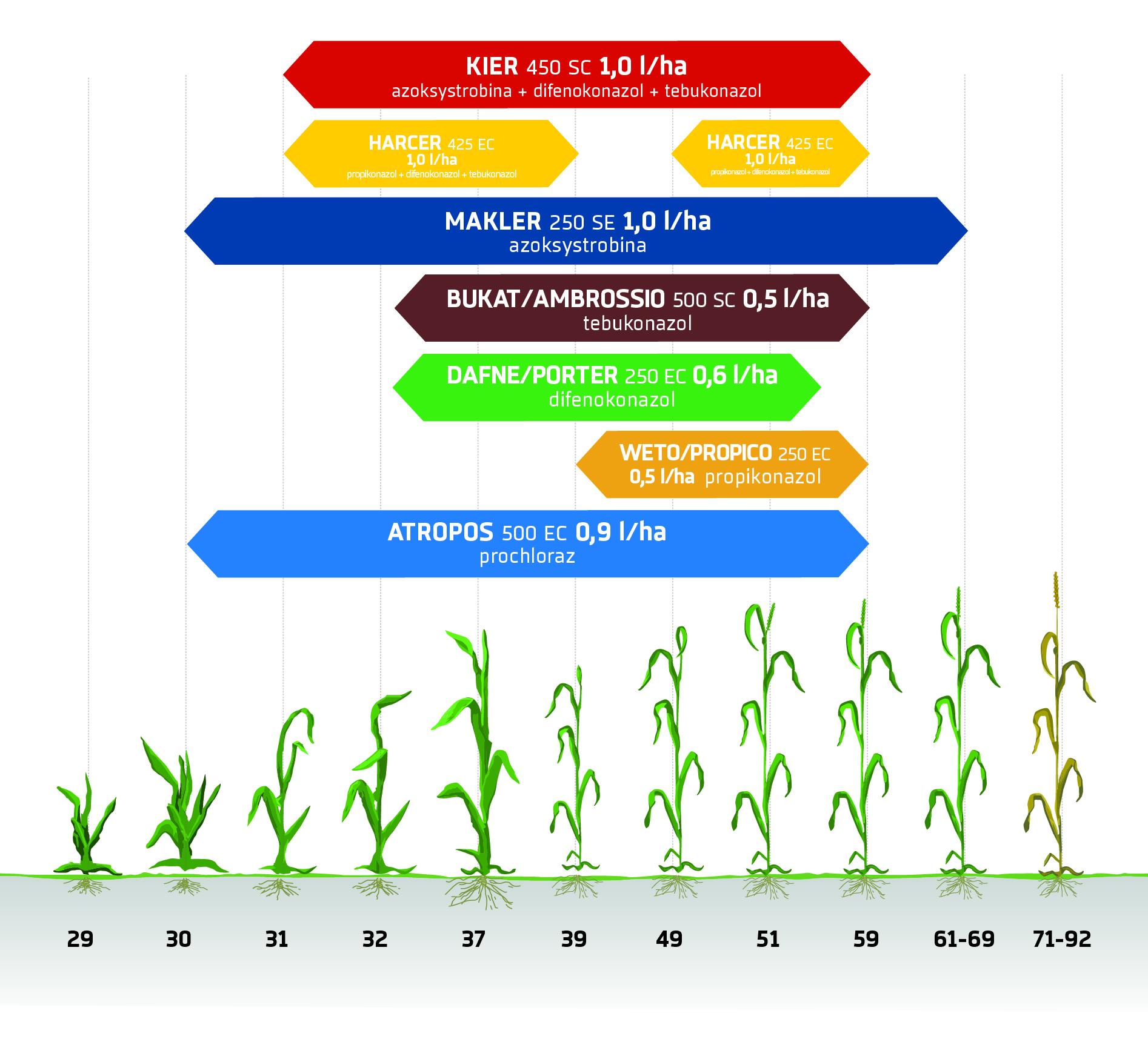 Zabiegi fungicydowe - zboża ozime. Ochrona fungicydowa INNVIGO.