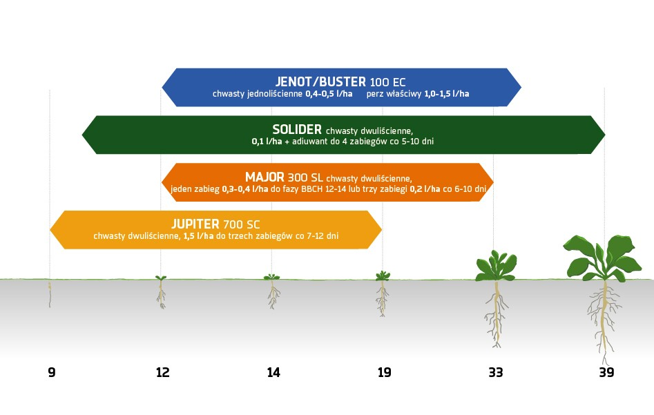 Zabiegi herbicydowe buraki cukrowe Innvigo ochrona herbicydowa