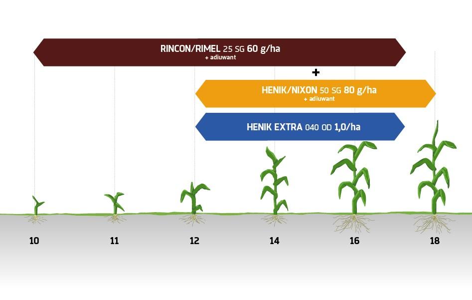 Zabiegi herbicydowe kukurydza Innvigo ochrona herbicydowa