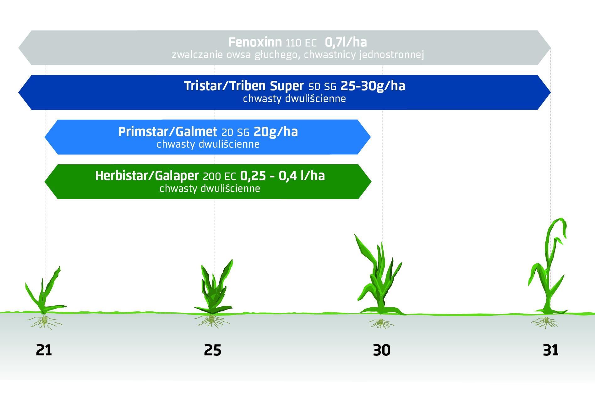 Zabiegi herbicydowe - zboża jare. Ochrona herbicydowa INNVIGO.