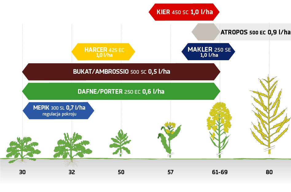 Zabiegi fungicydowe i regulacja pokroju rzepak ozimy na wiosnę Innvigo