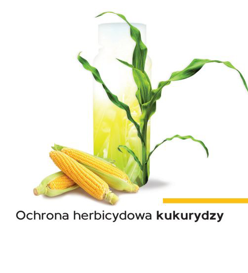 Ochrona herbicydowa kukurydzy