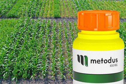 Zwalczanie chwastów w kukurydzy Metodus