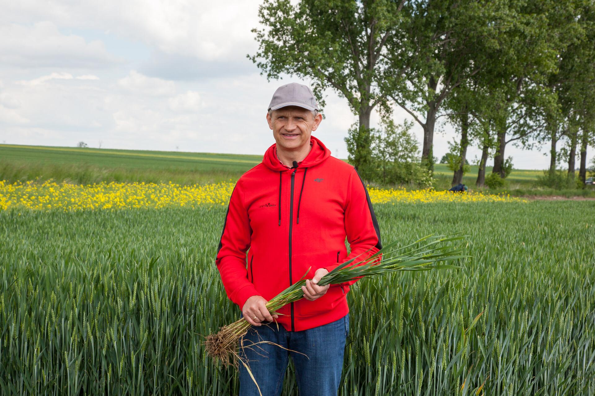 Zabieg T3 pszenica Marcin Bystroński