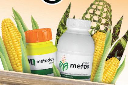 Metodus Metos zwalczanie chwastów kukurydza