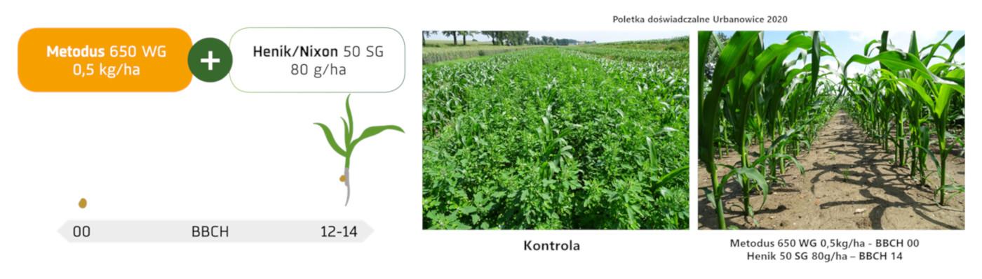 Ochrona kukurydzy Urbanowice 2020