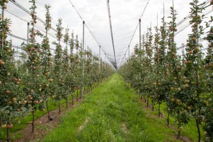Fungicyd do sadów - Kaptan
