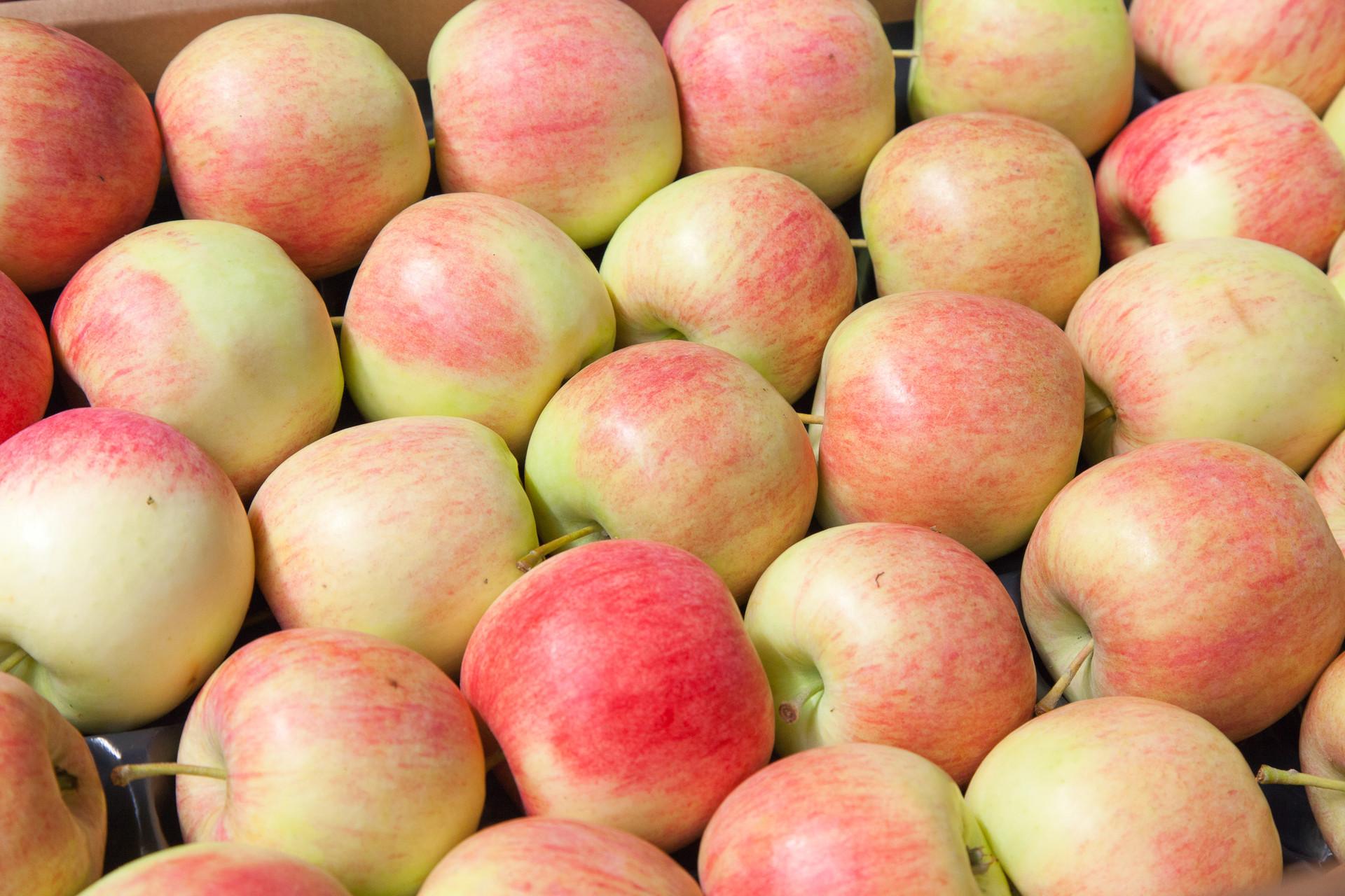 Piękne jabłka ochrona fungicydowa